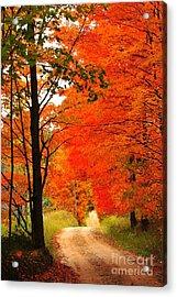 Autumn Orange 2 Acrylic Print by Terri Gostola