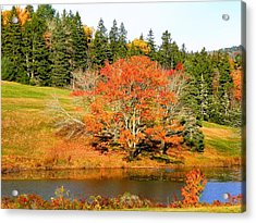 Acrylic Print featuring the photograph Autumn Orange by Gene Cyr