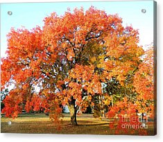 Autumn Orange Acrylic Print