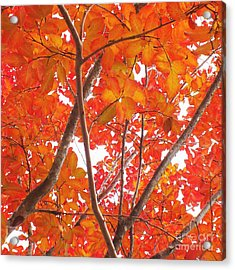 Autumn Orange Acrylic Print by Scott Cameron