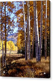 Autumn Paint Chama New Mexico Acrylic Print by Kurt Van Wagner