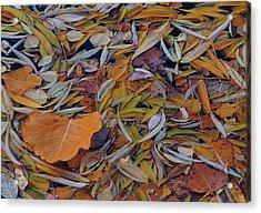 Autumn Palette Acrylic Print by Steven Milner