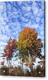 Autumn Perfection Acrylic Print