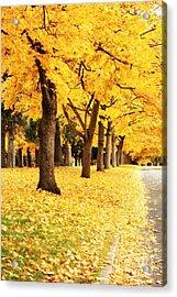 Autumn Perspective Acrylic Print by Carol Groenen