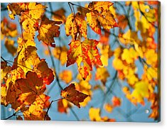 Autumn Petals Acrylic Print by JAMART Photography
