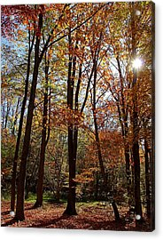 Acrylic Print featuring the photograph Autumn Picnic by Debbie Oppermann
