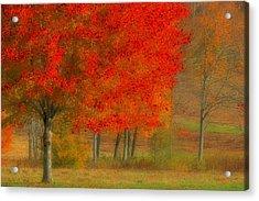 Autumn Popping Acrylic Print by Karol Livote
