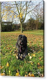 Acrylic Print featuring the photograph Autumn Portrait by Vicki Spindler