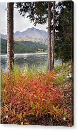 Autumn Quandry Acrylic Print by Morris  McClung