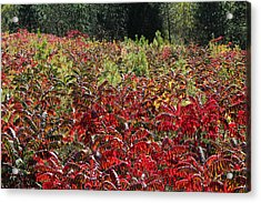 Autumn Radiance Acrylic Print by James Hammen