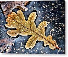 Autumn Rain Acrylic Print by Marianna Mills