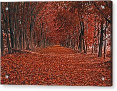 Acrylic Print featuring the photograph Autumn by Raymond Salani III