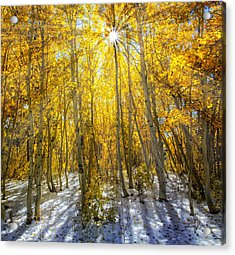 Autumn Rays Acrylic Print