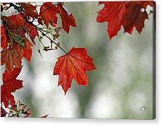 Autumn Red Acrylic Print by Karol Livote