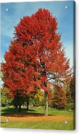 Autumn Red Acrylic Print by Frozen in Time Fine Art Photography