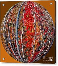 Autumn Reds Acrylic Print by Scott Cameron