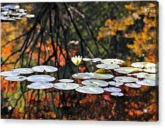 Autumn Reflection Acrylic Print by Katherine White