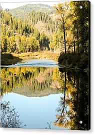 Autumn Reflections 5 Acrylic Print by Curtis Stein