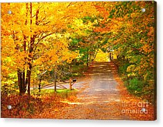 Autumn Road Home Acrylic Print