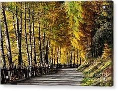 Winding Road Through The Autumn Trees Acrylic Print