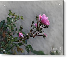 Autumn Rose Acrylic Print by Lutz Baar