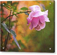 Autumn Rose Acrylic Print by Theresa Tahara
