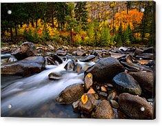 Acrylic Print featuring the photograph Autumn Rush by Dan Mihai