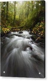 Autumn Rush Acrylic Print by Darren  White