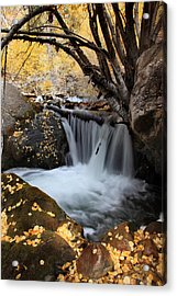 Autumn Rush Acrylic Print by Darryl Wilkinson