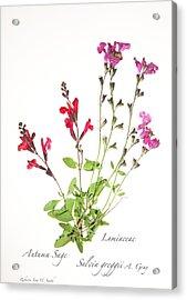Autumn Sage Acrylic Print
