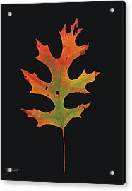 Autumn Scarlet Oak Leaf Acrylic Print