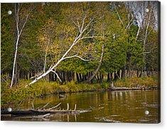 Autumn Scene On The Little Manistee River Acrylic Print