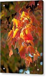 Autumn Acrylic Print by Sebastian Musial