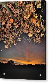 Autumn Sky And Leaves 1 Acrylic Print
