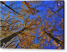 Autumn Sky Acrylic Print by Kathi Isserman