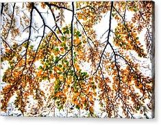 Autumn Snow Acrylic Print by Roman St