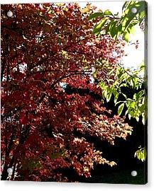 Autumn Snowball Bush Acrylic Print by Will Borden