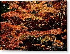 Acrylic Print featuring the digital art Autumn Solarisation 1 by Rudi Prott