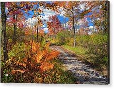 Autumn Splendor Acrylic Print by Bill Wakeley