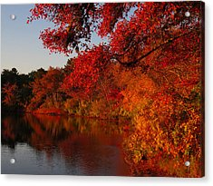 Acrylic Print featuring the photograph Autumn Splendor  by Dianne Cowen