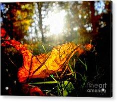 Autumn Splendor Acrylic Print by Janine Riley