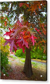 Autumn Splendor Acrylic Print by Mamie Thornbrue