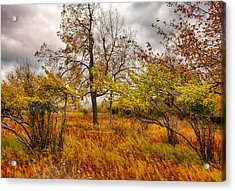 Autumn Storm At Dolly Sods West Virginia I Acrylic Print by Dan Carmichael