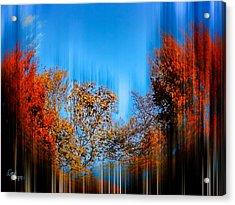 Autumn Streak Acrylic Print