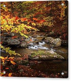 Autumn Stream Square Acrylic Print by Bill Wakeley