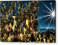 Acrylic Print featuring the photograph Autumn Sun by Kevin Bone