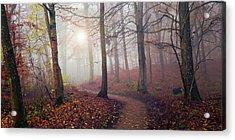 Autumn Sun. Acrylic Print