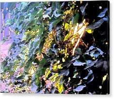 Autumn Sun On Leaves Acrylic Print