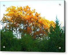 Autumn Sunlight Acrylic Print by Pete Trenholm
