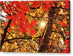 Autumn Sunrise Painterly Acrylic Print by Andee Design